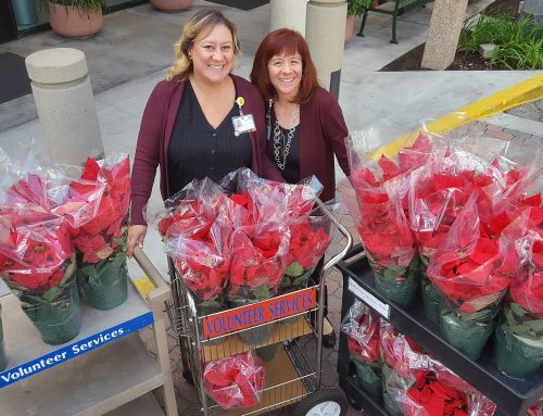 Christmas Poinsettia Delivery 2017